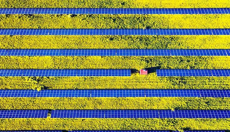 Painéis solares em um campo aberto.